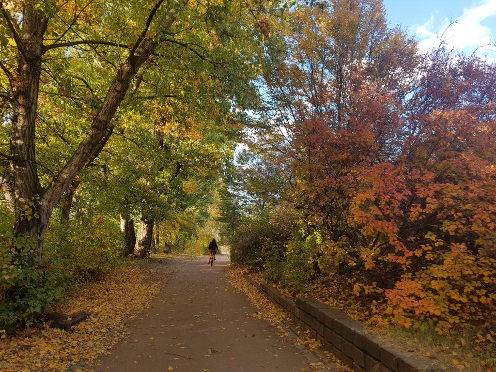 Phase 3 : un chemin de promenade. Crédit Zahra Blal / LyonBondyBlog.
